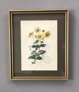 VIntage Botanical Engraving by MIss Sarah Drake/ G Barclay - pub by RIdgway 1841