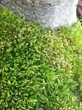 Terrarium Moss Pot Top Live Green Plant Fairy Garden Organic No Chemical Sheet
