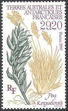 FSAT/TAAF 1997 Flowers/Plants/Nature/Poa kerguelensis/Grass 1v (n23402)