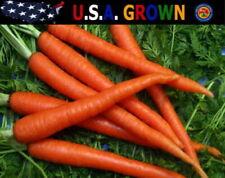 2000 Carrot Seeds Scarlet Nantes Non-Gmo Heirloom Gardening