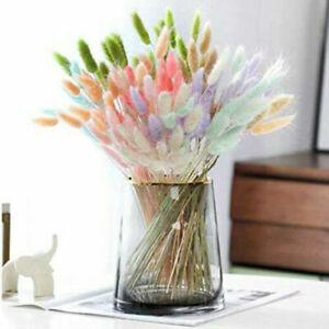 50 Piece Rabbit Tail Grass Bunny Tails Dried Flowers Lagurus Ovatus Plant Stems