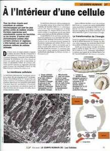 Fascículo Nuestra Monde - El Cuerpo Humano - A L'Interior' Una Célula