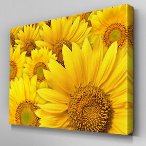 FL502 Yellow Sunflower Floral Canvas Wall Art Ready to Hang Picture Print