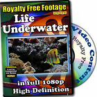 Underwater Life-HD Royalty Free Stock Footage, Personal