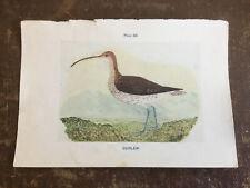 "Antique Vintage Book Plate Bird CURLEW 7""x5"""