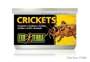 Exo Terra Canned Crickets Reptile Lizard Food 34g