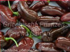 HABANERO Brown * chili * Chilli MARRONE ** ultrascharf 10 freschi semi BALCONE