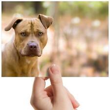 """American Staffordshire perro pequeño fotografía de 6"""" X 4"""" Foto Impresión de Arte Regalo #8634"""