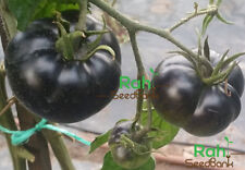 Black Beauty Tomato - 10 Seeds!