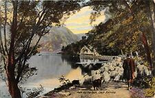 LOCH KATRINE SCOTLAND UK PATH BY THE LOCH WITH SHEPHERD & SHEEP~POSTCARD