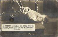 Hunting - Boise Idaho ID - Dead BadgerLong Gulch Ranch Real Photo Postcard