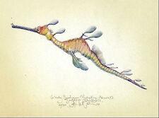 Seahorse WEEDY SEA DRAGON original MEDIUM SIZE art print handworked & SIGNED
