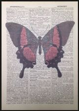 Vintage Butterfly Insect Print Antique Dictionary Page Wall Art Picture Red
