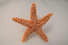 "Sugar StarFish Sea Shell Wedding Real Craft 3"" - 4"" (1 pc)"