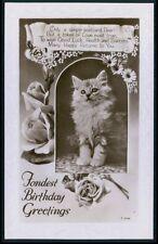 Persian Hairy Tabby Pussy Cat Kitten original vintage 1920s photo postcard 838