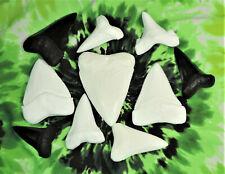 Megalodon Great White Mako Sharks Teeth REPLICA