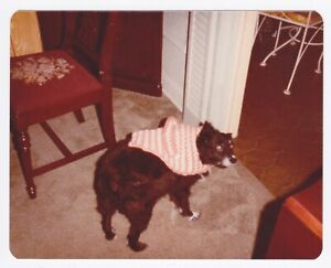Vintage 80s PHOTO Dog in Knit Cape Looking Back at Photographer