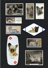 SKYE TERRIER MOUNTED COLLECTION OF VINTAGE DOG CARDS GREAT GIFT