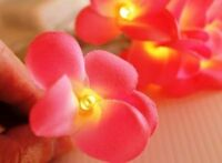NEW Solar Power LED Pink Frangipani Flower Fairy Lights 8 Meter 20 Flowers