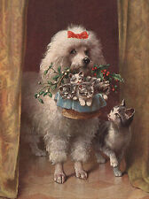 POODLE CHARMING DOG GREETINGS NOTE CARD BEAUTIFUL WHITE DOG WITH CAT AND KITTENS