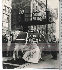 ORIGINAL PRESSEFOTO: MARY SUE HODGE in NEW YORK MILKING a COW on TIME SQUARE