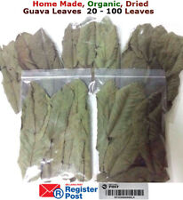 Organic Garden Guava Leaves Fresh Green Dried Antidiabetic AntiHairLoss Tea