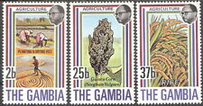 Gambia 1973 Agriculture Rice Crop Planting Drying Sorghum MNH (SC# 287-289)