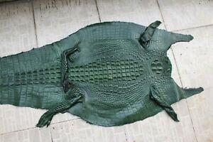 Genuine Real Alligator Crocodile Skin Leather Hide Exotic Pelt taxidermy Craft