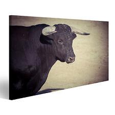 Bild auf Leinwand Mut, Bruch des Stierkampfes, wo ein Stier kämpft ein DLK-1K