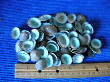 100 BLUE-GREEN LIMPET SHELLS/seashells/cypraea/cowrys/craft/jewelry/crafts
