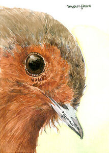 ACEO Limited Edition -Close-up robin, Art print of original watercolor