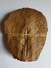 """10 Grade a Indian Almond Leaves 10-15cm 4-6"""" for Shrimps Betta Tropical Fish"""