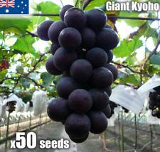 Giant Kyoho Grape Seeds x50 Japanese Sweet Vine Plant Seed RARE Heirloom Exotic