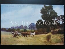 Old PC - THE HARVEST OF THE GOLDEN GRAIN - showing working Shire Horses in field