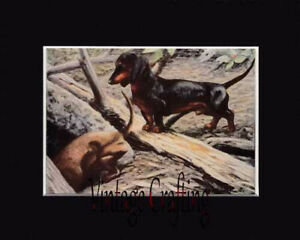 The Daschund DogFrom paintings by Louis Agassiz Fuertes
