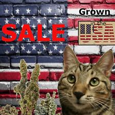 SALE, BUDS Premium catnip homegrown, Flower, Cat nip, dried,(2019 crop)