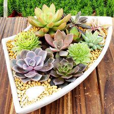 150pcs Mixed Succulent Flower Seeds Lithops Bonsai Cactus Exotic Garden Planting