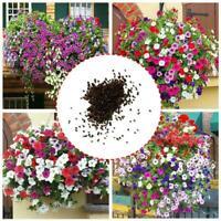 200 x PETUNIA SEEDS Violacea Flower Seeds Mix Colour