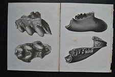 Originaldrucke (1800-1899) aus Nordamerika mit Lithographie