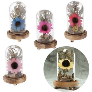 Real Natural Preserved Dried Flower in Glass Sunflower MicroLandscape