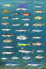 Salt Water Game Fish of North America Educational Reference Chart Poster 24x36