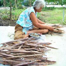 2000 Moringa PHYTOSANITARY CERTIFICATE Oleifera Plant Growing Benefits Tree Herb