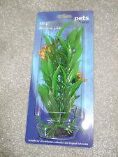 small aquatic plant
