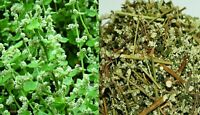 Herbal Polpala  Drink - Life enhancing ( Aerva Lanata ) 200g