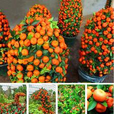 50pcs/bag Sweet Orange Fruit Plant Seeds Mini Potted Climbing Tree Seeds Dec,fr