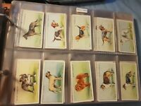 Dogs (1937) - Wills Cigarette Cards - Buy 2 & Save