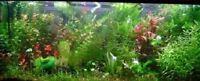 PROMO lot 100 plantes aquarium 13 variétés a racines et tiges +3 clado gratuites