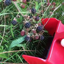 More details for berry picker with metal forks by marjukka