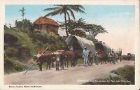 San Juan, PUERTO RICO - Bull Carts near Humacao - 1909