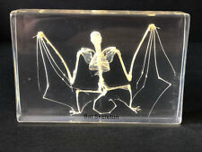 Skeleton of a Bat - Articulated - Specimen Display - Taxidermy
